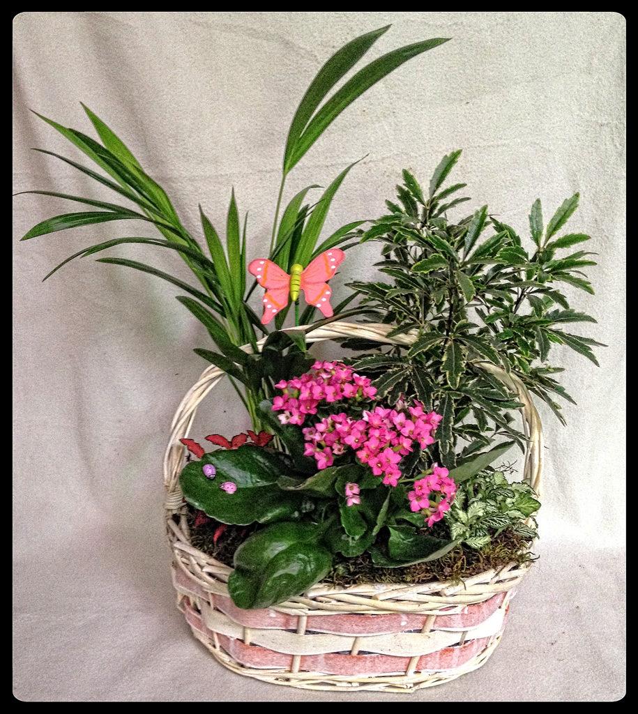Cesta de plantas recién nacida niña