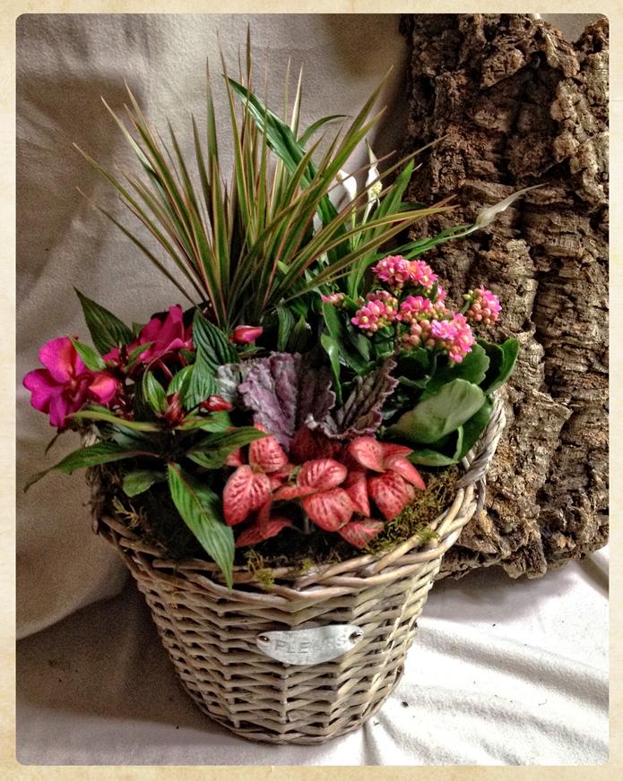Cesta aniversario de plantas