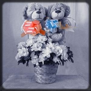 flores y plantas  nacimientos