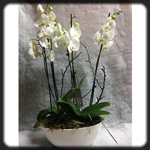 Flores y plantas para ocasiones especiales